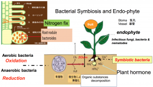 BacterialCultivationLBF