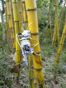 robotbamboo